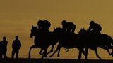 Horses on Newmarket gallops