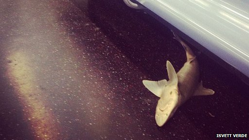 Shark Found On New York Subway