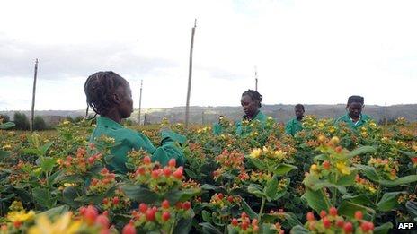 Flower pickers in Kenya