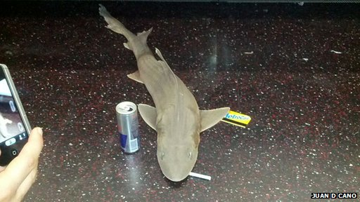 Shark on New York subway