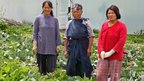 Three Bhutanese women wearing gloves in a vegetable patch.