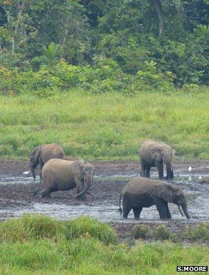 Elephants in a natural salt-lick (image: Sam Moore)