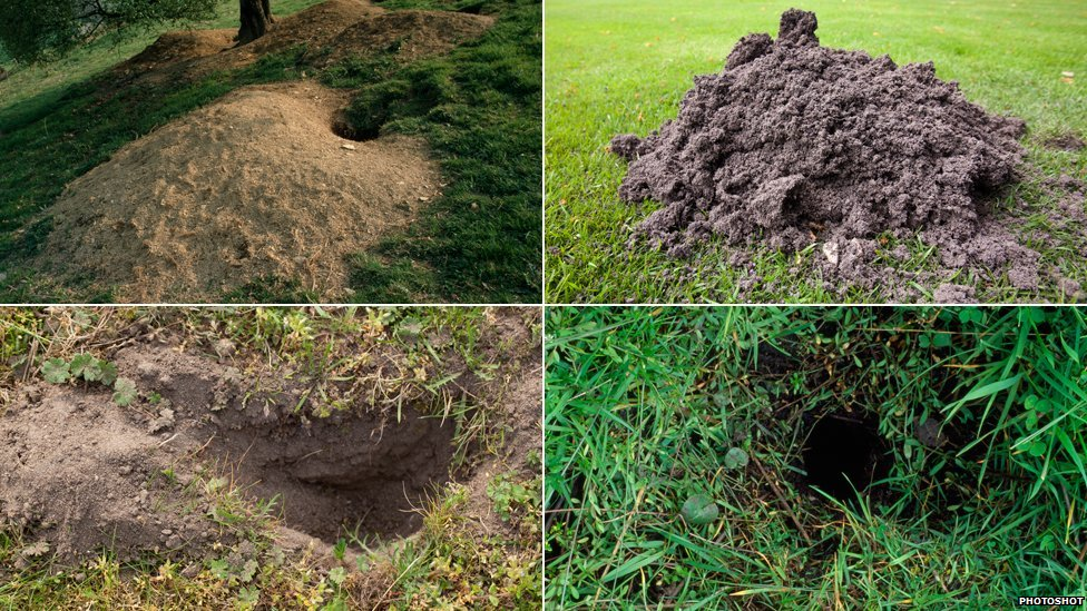Burrowing mammal homes