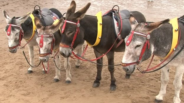 Donkeys on Cleethorpes beach