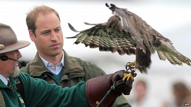 Prince William with a falcon