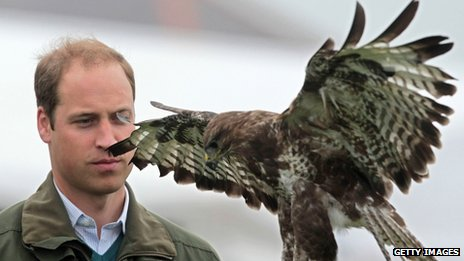 Prince William takes part in a falconry display
