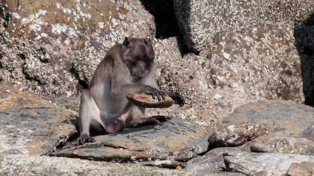 monkey with stone