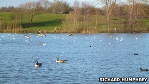 Ducks and geese on lake at Ferry Meadows, Peterborough