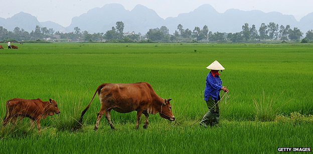 Farm in Vietnam