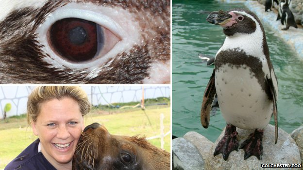 Humboldt penguin and Claudia Hartley