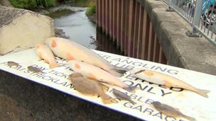 An anonymous caller told the DoE of a large number of dead fish