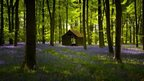 Cabin in a bluebell wood, Embley Wood, Hampshire