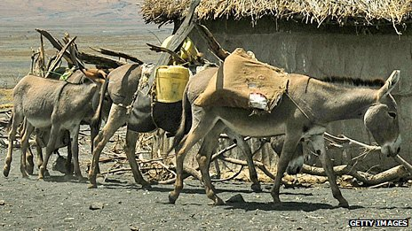 Donkeys in the Rift Valley