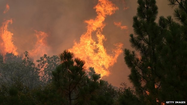 The Rim Fire consumes trees on 23 August 2013 near Groveland, California.
