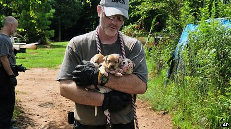 Photo provided by the ASPCA, puppies are carried by an official at a home in Auburn, Alabama 23 August 2013