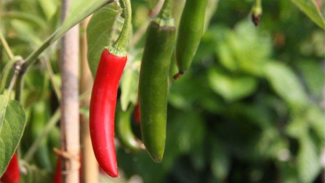 Serrano chillies