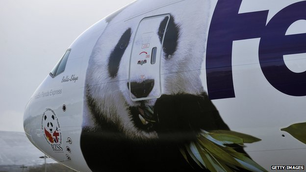 Tian Tian and Yang Guang arrived by a special Panda Express cargo plane