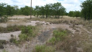 Typical habitat of the study species: a shallow savannah depression filled with water during the rainy season