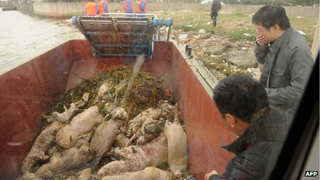 Dead pigs collected by sanitation workers from Shanghai's main waterway (March 2013)