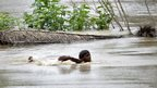 A flood-affected villager swims through the flooded waters of river Ganges after heavy rains at Patna district, in the eastern Indian state of Bihar,