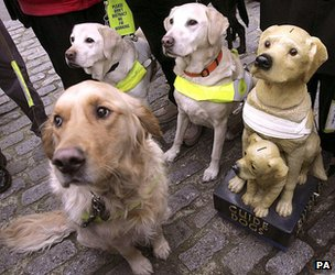 Guide dogs with a collection box