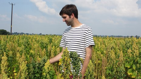 Stephen Jones with his quinoa crop
