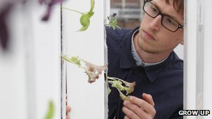 Tom Webster from Grow Up growing salad using a hydroponic system