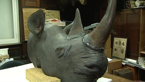 Homes raided over rhino horn theft in Ireland