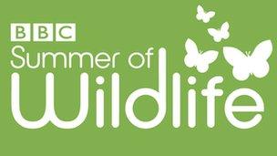 BBC Summer of Wildlife logo