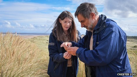 Chester Zoo keeper Isolde McGeorge and head of field conservation and research, Dr Roger Wilkinson with a sand lizard