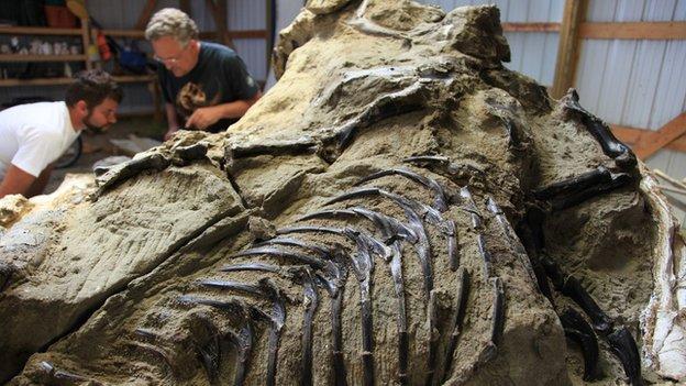 Dinosaur specimen