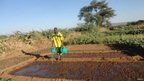 A member of the refugee community at the Kakuma refugee camp watering his vegetables, Turkana, Kenya