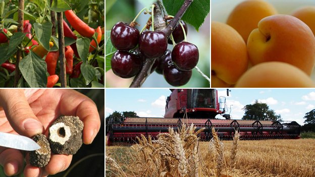 Chillies; cherries; apricots; truffles; harvester