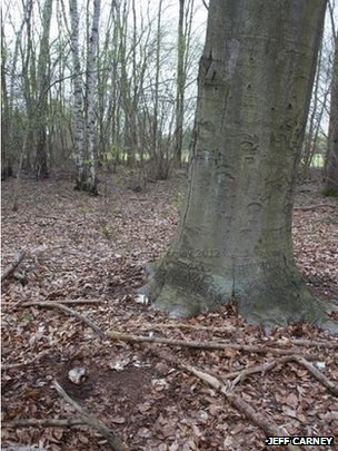 A tree in Eiskeller, Berlin