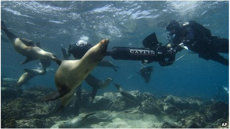 Crew filming sea lions in Galapagos