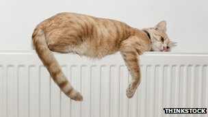 Cat on a radiator