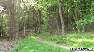 Mine Woods