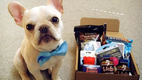 A dog with a BarkBox pack