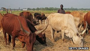 Donations to Oxfam can be used to buy cows for people in Zambia