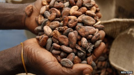 A farmer holding a pile of cocoa beans