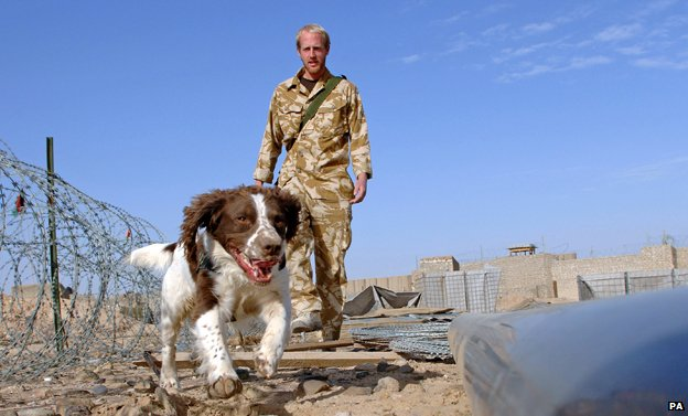 Explosives sniffer dog in Afghanistan
