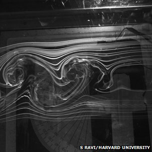 Smoke trails in a wind tunnel (c) Sridhar Ravi