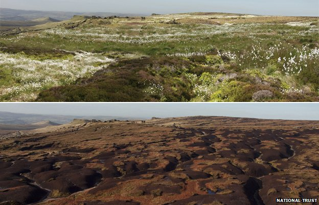Composite image showing current state of High Peak Moors (below) and an artist's impression of the restored landscape (Image: National Trust)