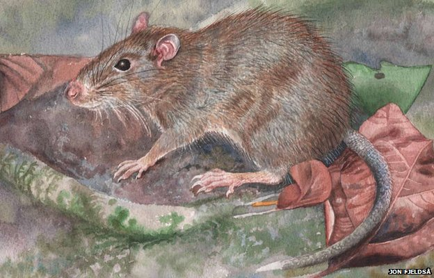 Spiny rat found in Indonesia