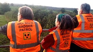 Wounded badger patrol