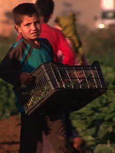 Young Syrian boy with a basket of courgettes