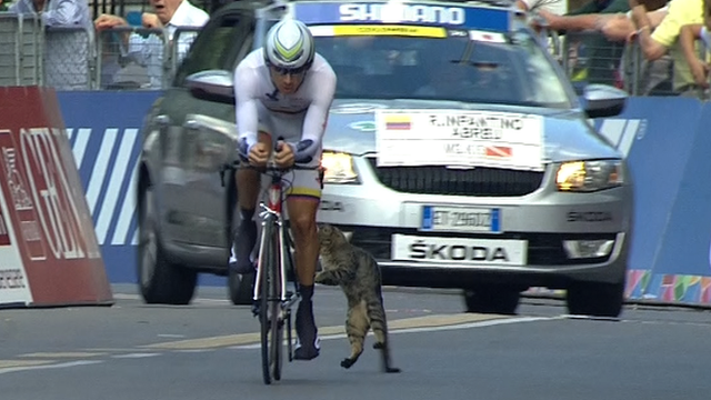 A cat almost collides with a rider in the men's time trial