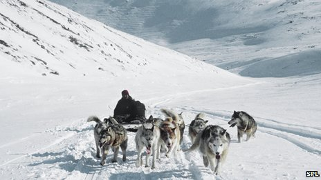 Dog team travelling over snow