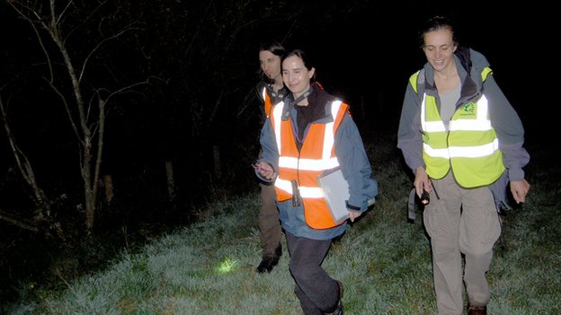 Wounded Badger Patrol on public footpath