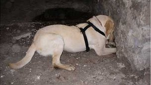 Sniffer dog Sam in training